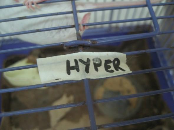 Hyperthyroid Mouse